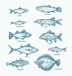 Hand drawn ocean or sea and river ten fishes set vector