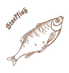 Pencil hand drawn of stockfish with label vector