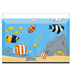 exotic fishes in aquarium vector image