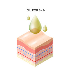 Oil for skin cross-section human skin layers vector