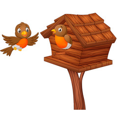 Robin bird at nesting box vector