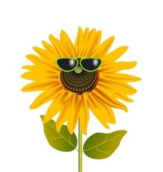 sunflower in glasses vector image