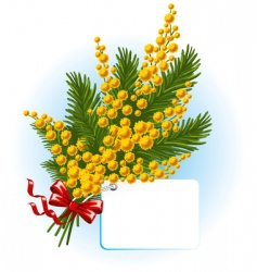 bouquet of mimosa and forgetmenot vector image