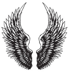 hand drawn eagle wings vector image vector image