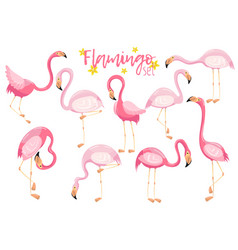 beautiful elegant pink flamingos set exotic vector image