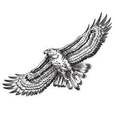 hand drawn hawk vector image