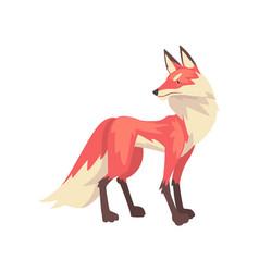Beautiful fluffy red fox character cartoon vector