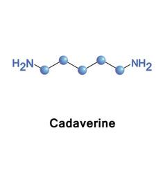 Cadaverine toxic diamine vector