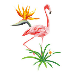 pink flamingo with tropical plants and flowers vector image