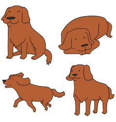 Set of dog golden retriever vector