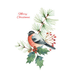 Watercolor christmas bouquet with bullfinch vector