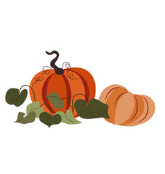 ripe big pumpkins with leaves autumn harvesting vector image