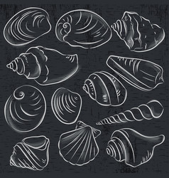 Set of different types of clams and shells vector