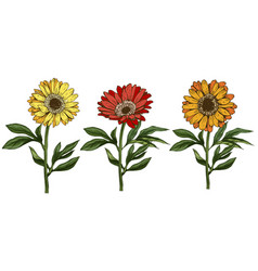three hand drawn yellow and red daisy flowers vector image