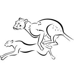 Two running Leopard vector image