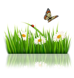 Nature grass background vector