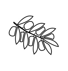 olive branch it is black icon vector image vector image