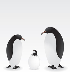 penguins and baby penguin vector image vector image