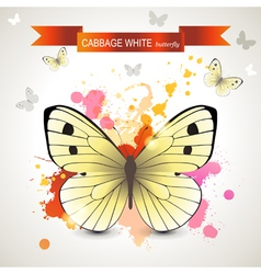 cabbage white butterfly vector image