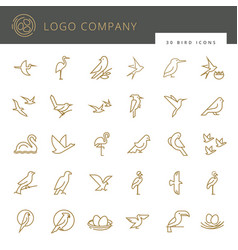 flat birds icon set thin line style for icons vector image