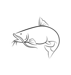 graphic catfish on white background vector image