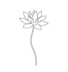lotus flower on white vector image