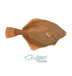 Olive flounder sea fish vector