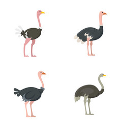 Ostrich icons set flat style vector