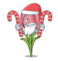Santa with candy crocus flower mascot cartoon vector