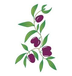 black olives vector image vector image