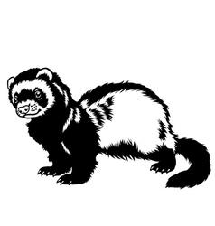 ferret black white vector image vector image