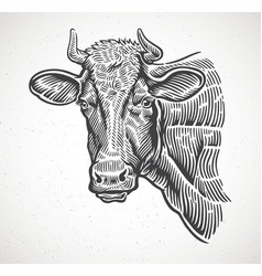 cows head in a graphic style drawn vector image