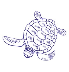 drawing sea turtle vector image
