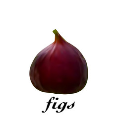 fresh realistic figs on a white background vector image