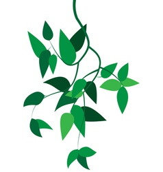 Green branch with leaves vector image