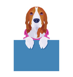 adorable beagle wearing pink shirt holding empty vector image