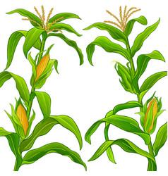 Corn frame vector