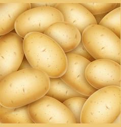 potatoes useful vegetable vector image