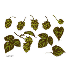 set hand drawn colored hop vector image