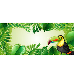 toucan on nature border vector image