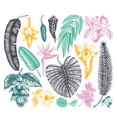 tropical plants exotic flowers citrus fruits palm vector image