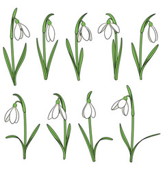 Set of color with snowdrops vector