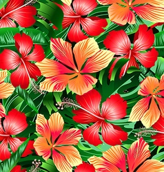 Tropical orange and red variegated hibiscus vector image vector image