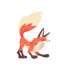 Aggressive red fox character cartoon vector