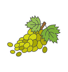 branch of green grapes flat icon vector image