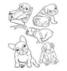 bulldog pet animal line art vector image