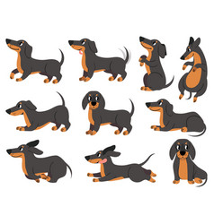 dachshund cute dogs characters various poses vector image