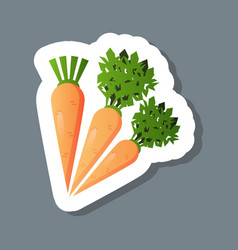 fresh carrot sticker tasty vegetable icon healthy vector image