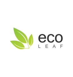 green eco leaf logo vector image