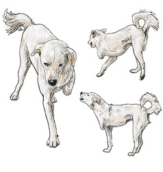Handicapped dog vector